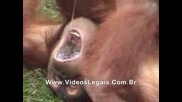Маймуна Си Пишка В Устата