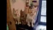 Тъпи Котки
