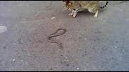 Котка срещу змия... важен е крайния резултат
