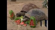 Коледата дойде по-рано за животните в зоопарка в Сидни