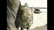 Костенурки Крадци - Реклама