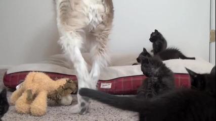 Игриви котенца се закачат с мързеливо кученце