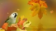 Октомври! ... ( Samvel Yervinyan - violin) ... ( Adagio in G Minor ( Albinoni) ...
