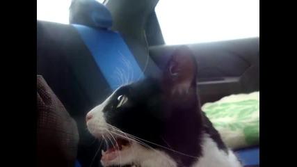Учудената котка