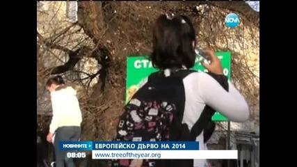 Европейско дърво на 2014 - Новините на Нова