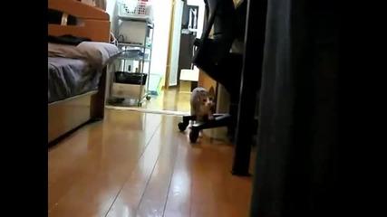 Коте играе на 1,  2,  3 стоп