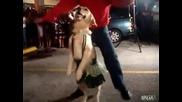 Куче танцува латино