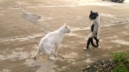 Кобра Котка Показва Умения