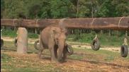 Детска градина за слончета