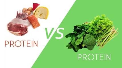 Muscle Damage - Разлика между животински и растителен протеин