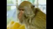 Brainiac - Измамената Маймуна