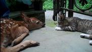 Най-сладурското Видео ! Коте и Сърничка