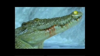 Крокодилски лов