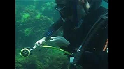 Подводно Клипче От Черно Море - 2