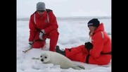 Stop The Seal Hunt