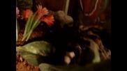 Тарантула яде новородено мишле