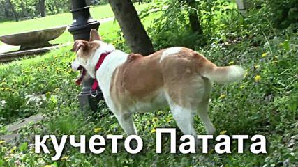 Трикракото куче Патата си търси дом