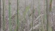 Силата на зърното - Зеленият отбор - Canon 550d - 2