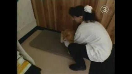 Рекорд На Гинес - Най - Дебелата Котка