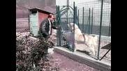наи злобното куче