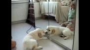 Кученце И Огледало