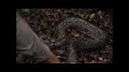 Bear Grylls Убива 4 Метрова Боа Удушвач