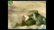 Маймуни яздат глигани брат
