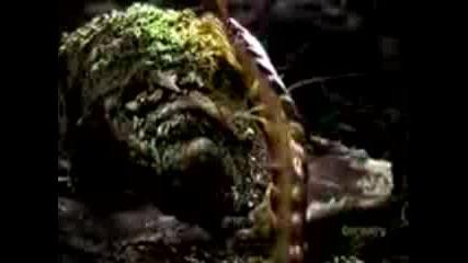 Стоножка Убива Тарантула