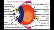 Зрението като метафора