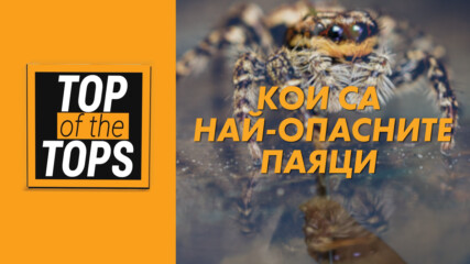 Кои са едни от най-опасните паяци