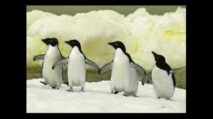 Dansul Pinguinului 2012