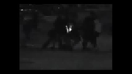 Suave Smooth - Gangstas & Thugs