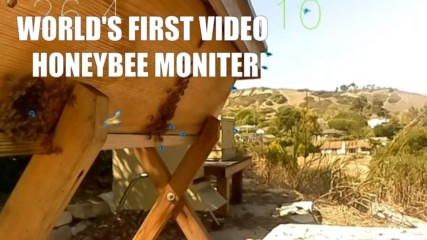 Bee Innovations: EyesOnHives is video surveillance for bees
