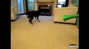 Куче се насра много смешно