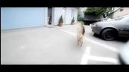 Zvonko Demirovic & Moby Dik - Zena kad pamet popije - Offical Video 2012