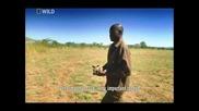 Грандиозни премествания на животни Носорози (част 3/4) Бг Аудио