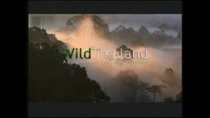 Дивият Тайланд - Забравена и пустош