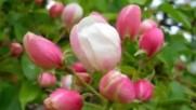 Петя Буюклиева Пролет