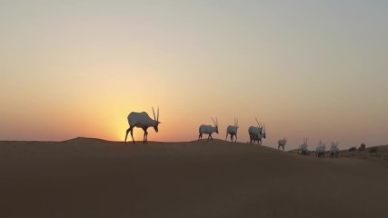 Арабският орикс е бил на прага на изчезването (