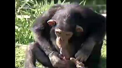 Maimuna si pie piknqta!!!!