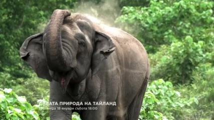 Дивата природа на Тайланд | премиера 18 януари събота