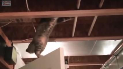 Смешни Котки Скокове
