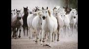 Наско Ментата - Седен Бели Коня