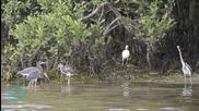 Wildlife Service Baffled by Exodus of Birds From Florida Isle
