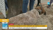 Глутница бездомни кучета тормози цял квартал в Плевен