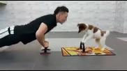 Кученце прави упражнения