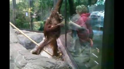 Коя е Маймуната