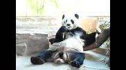 Панда турбогъзар