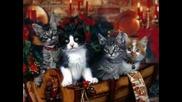 Christmas Greetings With Karen Carpent