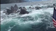 Мъж неочаквано заснема гърбати китове, които се хранят
